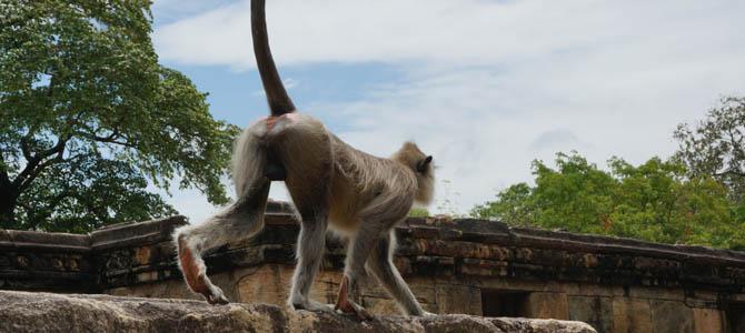 Day 5 – Exploring Polonnaruwa